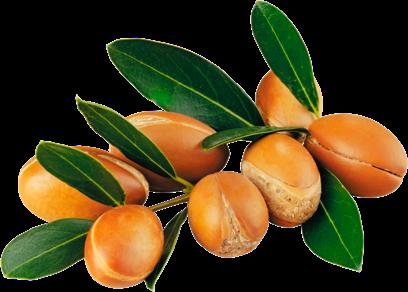 Semillas de argán